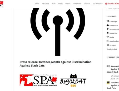 Communiqué de presse: octobre, mois contre la discrimination à l'égard des chats noirs